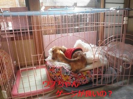 P1075534_20120110133738.jpg