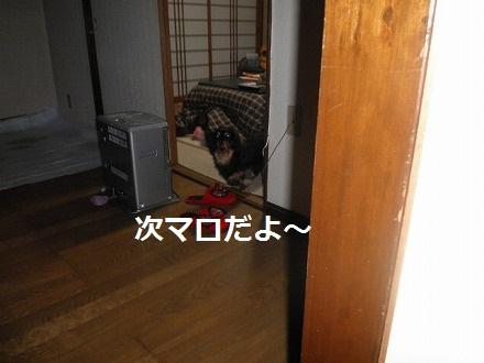 P3116242_20120312094926.jpg
