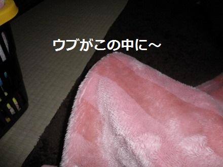 P3316501.jpg