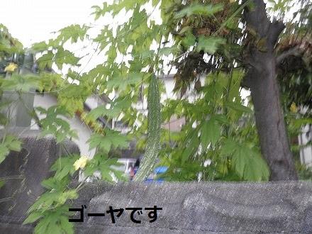 P8021361.jpg
