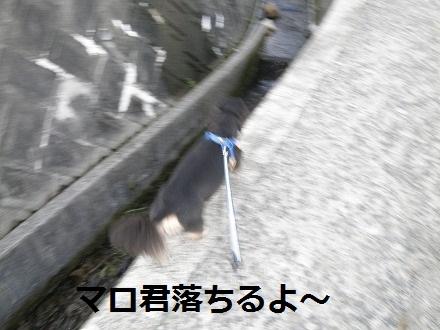 P9132224_20110913180544.jpg