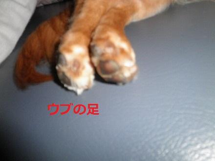 P9151301.jpg