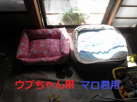 P9242489_20110924162959.jpg
