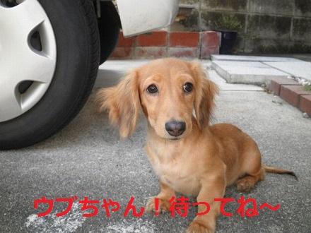PA032824_20111008171339.jpg