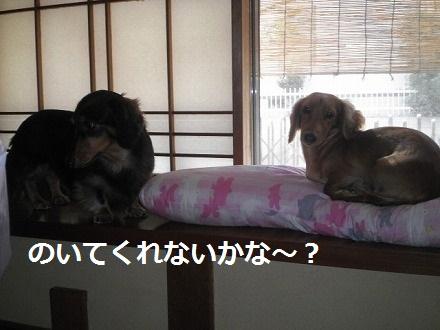 PA192285_20121020085552.jpg