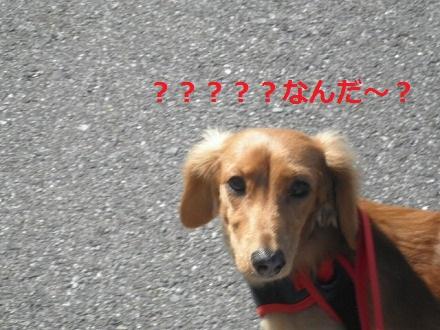 PA242409.jpg