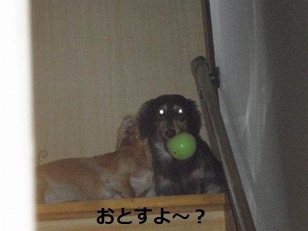 PA282540_20121031080652.jpg