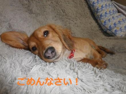 PA303611_20111031145936.jpg