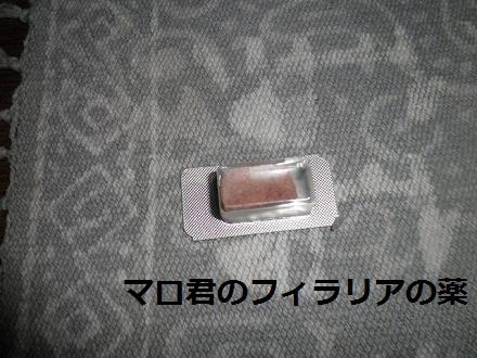 PB013662.jpg