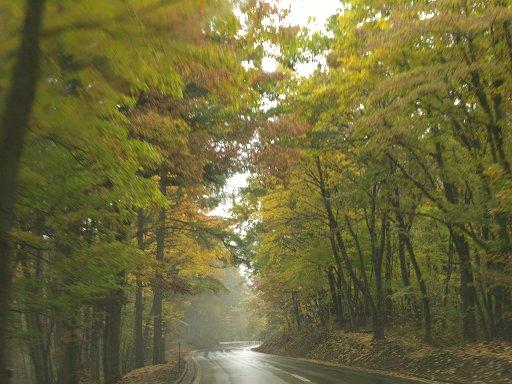 秋雨ドライブ