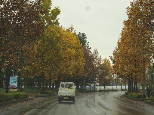 秋 雨 ドライブ