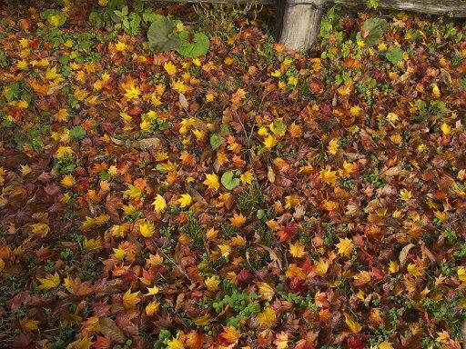 地に秋が降って