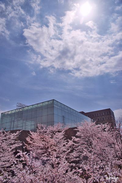 2010 04 03 内裏公園 054