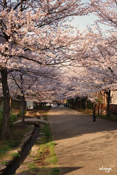 2010 04 03 内裏公園 179