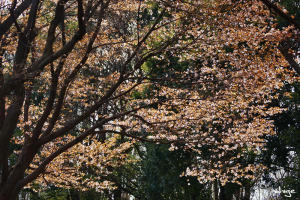 2010 04 03 内裏公園 129