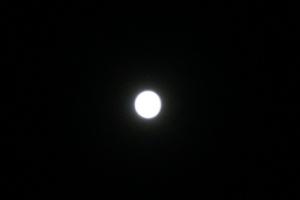 DSC02835.jpg