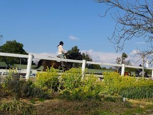 石ヶ谷公園の馬場