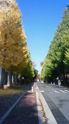 image/2009-11-25T17:53:541