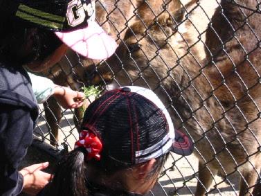 アルプス公園の動物園