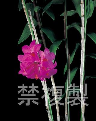 20100607_005.jpg