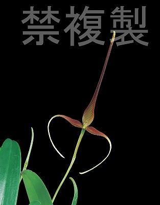 20100607_006.jpg