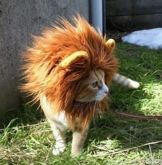 猫ライオン