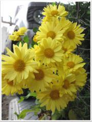 ずっと咲いてて嬉しいなあ、やっと写真撮った