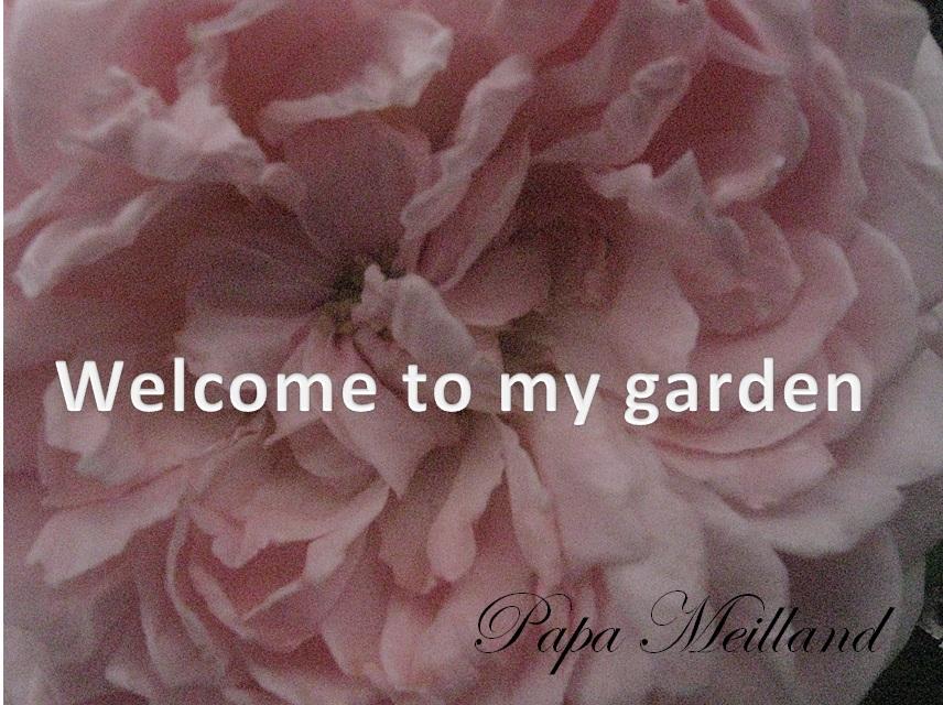 ガーデンへ.jpg