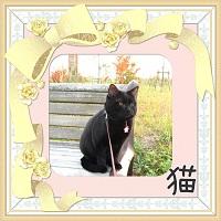 ブログ村猫へ