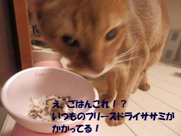 P9235705.jpg