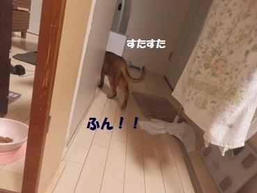 P9275738.jpg