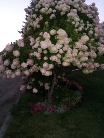 hydtree.jpg