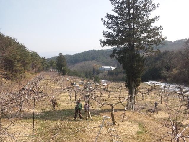 幸弘さん園
