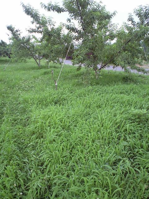草刈前-2
