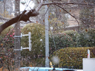 P1203418初雪