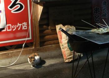 串とりと猫と