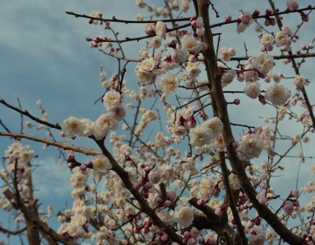 110320桜