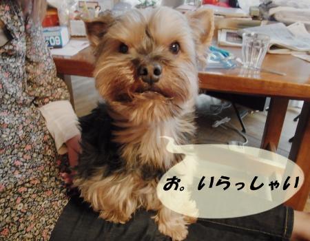 いらっしゃい20110416