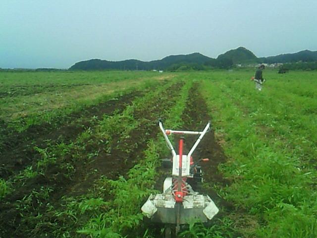 ウド培土管理機