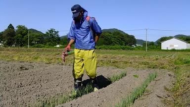 愛農散布正面
