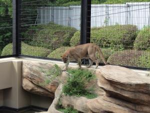 日本平動物園ーチーターー