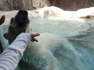 日本平動物園ー白クマー