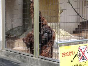 日本平動物園ーサイー