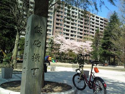 1004yokozuna004.jpg