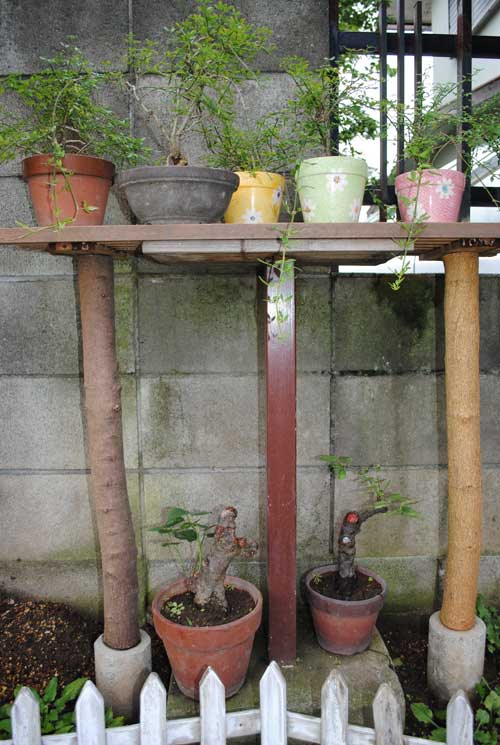 相場邸ブログお庭の棚