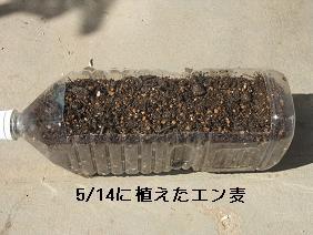 DSCF9442.jpg