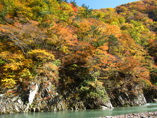 赤石渓流紅葉20141020 (3)