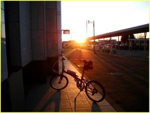 夕陽に映える