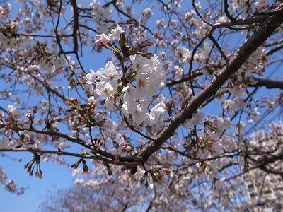 桜之宮公園その2