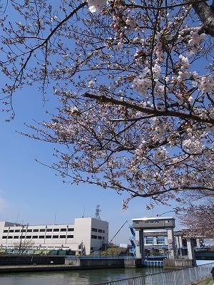 桜之宮公園その1